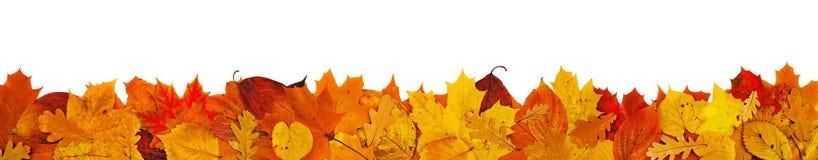 Big Leaf border Stock Images