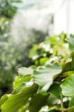 Big leaf. A big green leaf perforated royalty free stock image