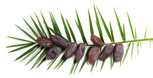 Big leaf of palm and dates, top view Royalty Free Stock Image
