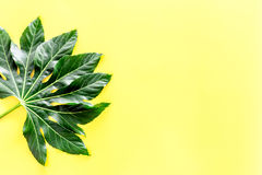 Big leaf of tropical plant on yellow background top view copyspace. Big leaf of tropical plant on yellow background top view Stock Photo