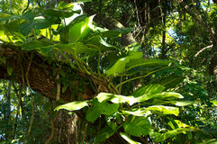 Big leafy plant on tree Stock Photo