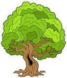 Big leafy tree Royalty Free Stock Photos