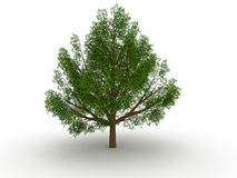 Big leafy tree Stock Photography
