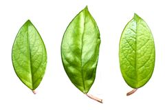 Three big leaves royalty free stock images