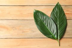 Big leaves of tropical banana palm. On wooden background Royalty Free Stock Photos