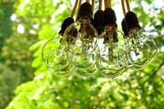 Big Light Bulb Bundle Hanging In A Garden Royalty Free Stock Image
