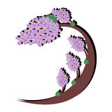 Big lilac tree. Wavy lilac tree with branches full of flowers vector illustration
