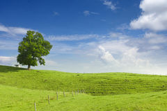 Big lime tree, small hut and wooden fence at green. Hill with blue sky at spring royalty free stock photo
