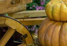 Big little pumpkin on each other close-up with copyspace on a wooden wheel background carts pattern Stock Image