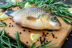 Big live carp crucian on a cutting board with rosemary branches. Royalty Free Stock Photos