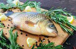 Big live carp crucian on a cutting board with rosemary branches. Royalty Free Stock Photo