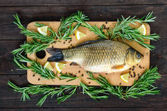Big live carp crucian on a cutting board with rosemary branches. Fresh catch. Top view Royalty Free Stock Photo