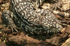 Big lizard stock photography