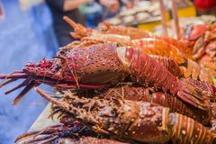 The big lobster stock image