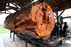 Big log at Snoqualmie Royalty Free Stock Image