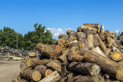 Big log stack in lumber yard Royalty Free Stock Image