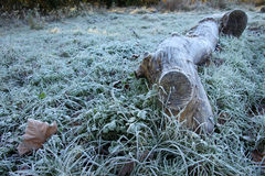 Big log with winter frost Royalty Free Stock Photography
