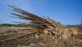 Big logging operation. Pile of logs in a big logging operation in Sasktachewan Canada stock photography