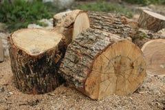 Big logs stock photos