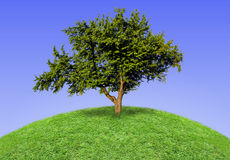 Big lonely tree Royalty Free Stock Photo