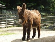 Big with long brown hairs. Big animal Long Brown hairs zoo tree europe wild stock image