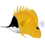 Big longnose butterfly fish Royalty Free Stock Photo
