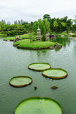 The big lotus leafs. Royalty Free Stock Photography
