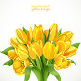 Big lush bouquet of yellow tulips background Stock Photos