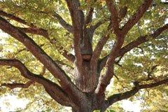 Big lush tree Stock Images