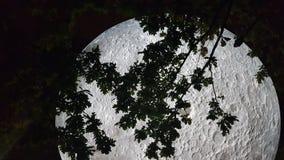 Big m0on sculptire wit tree royalty free stock photos