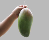 Big mango. In hand copy space Stock Images