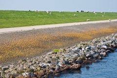 Big massive Dutch breakwater with sheep Royalty Free Stock Images