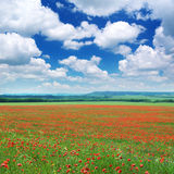 Big Meadow Of Poppys Royalty Free Stock Photos