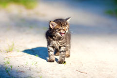 Big Meow. Little meowing kitten staying on the sandy road Stock Photo