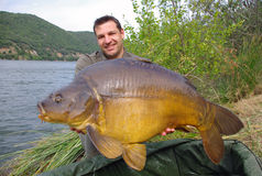 Big mirror carp. Happy  fisherman holding a giant mirror carp with large fins Stock Photos