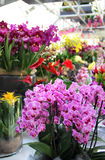 Big mix of amazing orchids Stock Photo