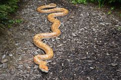 Big model of orange snake crawling on the floor. Photo of big model of orange snake crawling on the ground in park stock images
