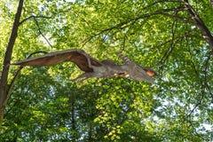 Prehistoric flying dinosaur Pteranodon in nature. Big model of prehistoric flying dinosaur Pteranodon in nature. Realistic scenery stock photos
