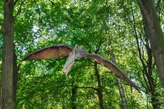 Prehistoric flying dinosaur Pteranodon in nature. Big model of prehistoric flying dinosaur Pteranodon in nature. Realistic scenery Royalty Free Stock Photos