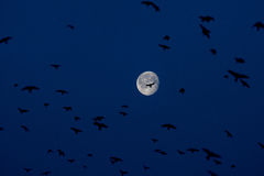 Big moon and birds in blue sky Royalty Free Stock Photos
