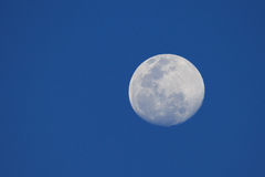 Big moon in a night blue sky Stock Images