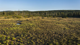 Big moorland. In nice nature during sunset. Clear blue sky in background stock photography