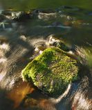 Big mossy boulder in water of mountain river. Clear blurred water with reflections. Gulch covered beeches and maple tre Stock Image