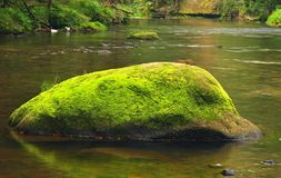 Big mossy boulder in water of mountain river. Clear blurred water with reflections. Gulch covered beeches and maple tre Stock Images