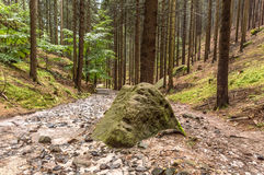 A big mossy, green rock in between a forest path Stock Photo