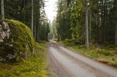Big mossy rock at a dirt road side Royalty Free Stock Image
