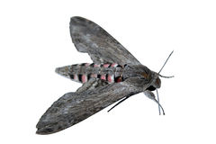 Big moth Stock Images