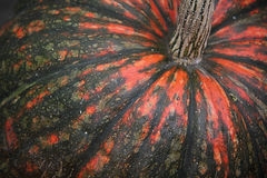 Big mottled pumpkin Stock Images