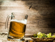 Big mug of beer stands on linen cloth with hops Royalty Free Stock Photo