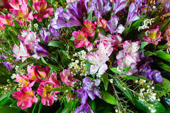 Big multicolor  alstroemeria  flowers bouquet Royalty Free Stock Images